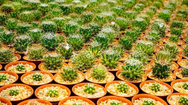 Cactus plant dentro do viveiro Foto Premium