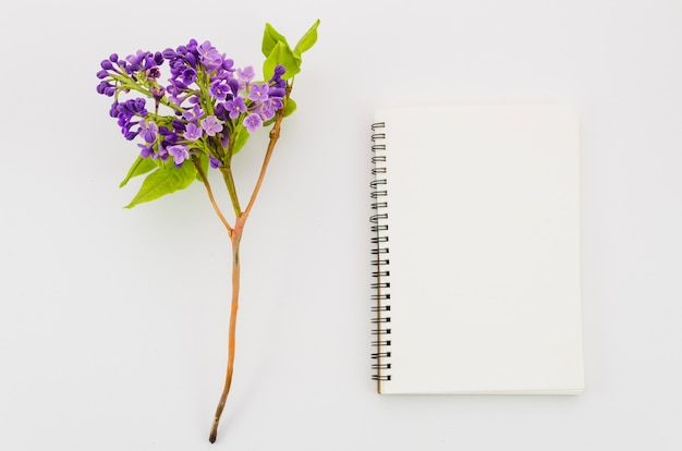 Caderno de vista superior com flor Foto gratuita