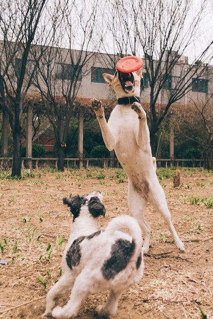Cães brincando lá fora Foto gratuita