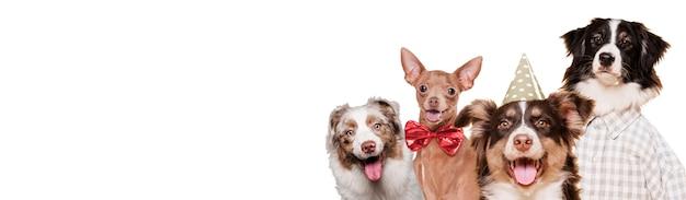 Cães de vista frontal em trajes Foto gratuita
