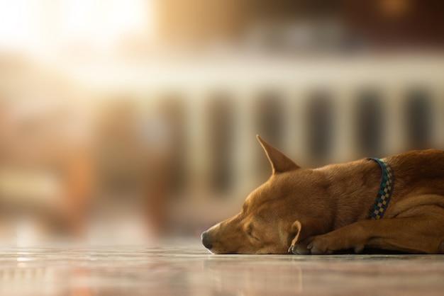 Cães desabrigados abandonados dormindo no chão com luz Foto Premium
