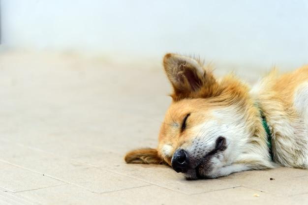 Cães dispersos do close up que dormem na rua com macio-foco e sobre a luz no fundo Foto Premium