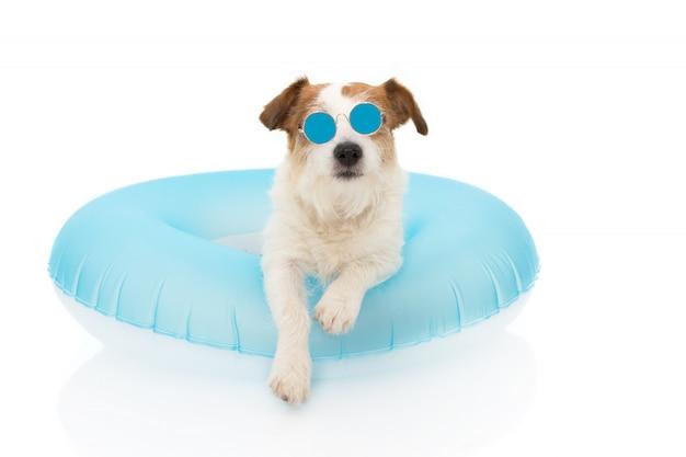 Cães férias de verão. jack russell dog sunbathing com os óculos de sol desgaste da ilha azul da flutuação do ar em feriados. Foto Premium