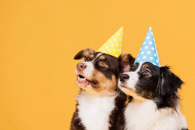Cães fofos com chapéus Foto gratuita