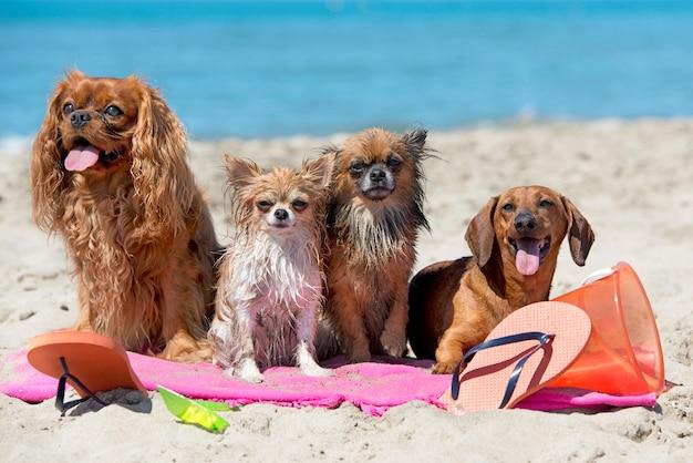 Cães na praia Foto Premium