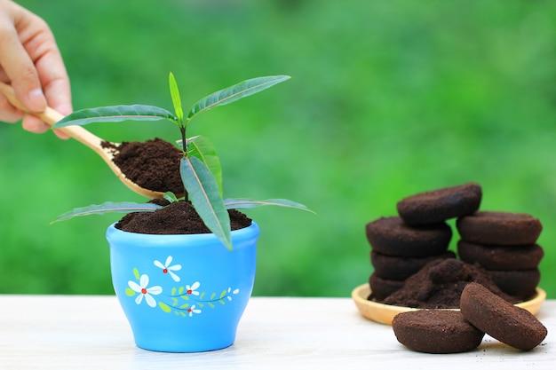Café moído, resíduo de café é aplicado à árvore e é um fertilizante natural Foto Premium