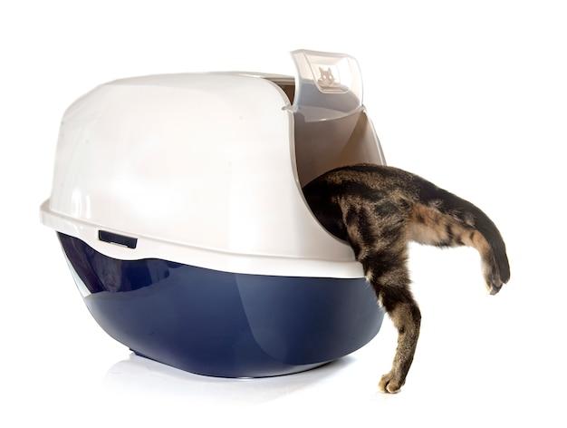 Caixa de maca de gato fechado Foto Premium