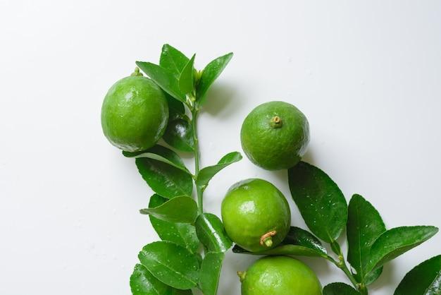 Cal verde sobre fundo branco Foto Premium