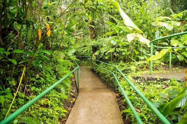 Calçadão vazio na floresta tropical exuberante Foto gratuita