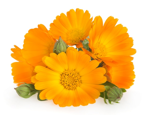 Calêndula flores com folhas Foto Premium