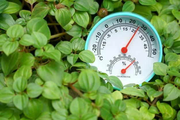 Calibre de temperatura verde na árvore à terra na manhã. Foto Premium