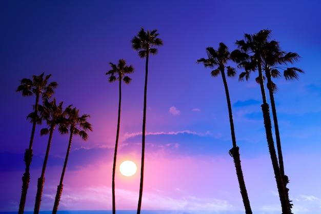 Califórnia alta palmeiras pôr do sol céu silohuette fundo eua Foto Premium