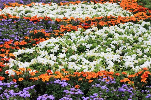 Cama de flor com as flores no verão. um dia ensolarado, foto ampla. Foto Premium
