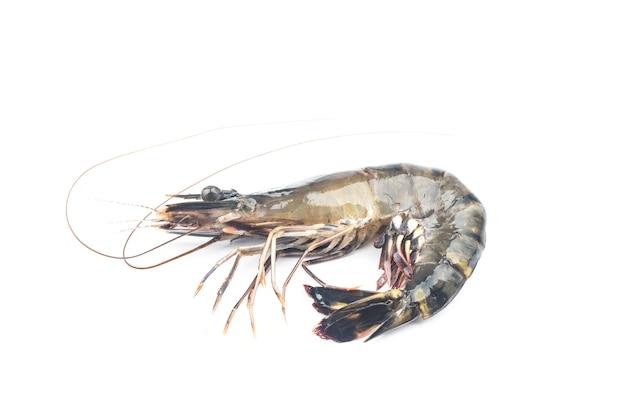 Camarão fresco ou camarão em fundo branco. camarões crus isolados no fundo branco. Foto gratuita