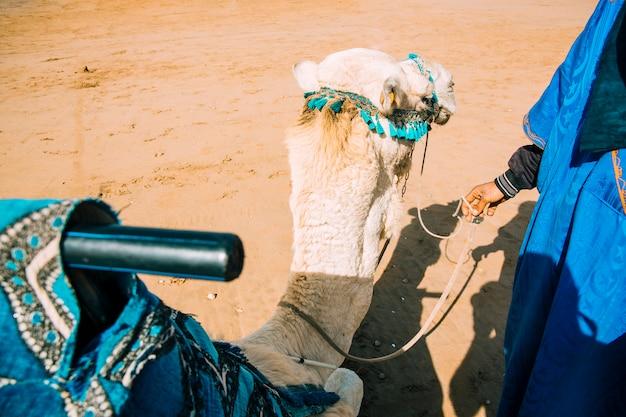 Camelo na paisagem do deserto em marrocos Foto gratuita