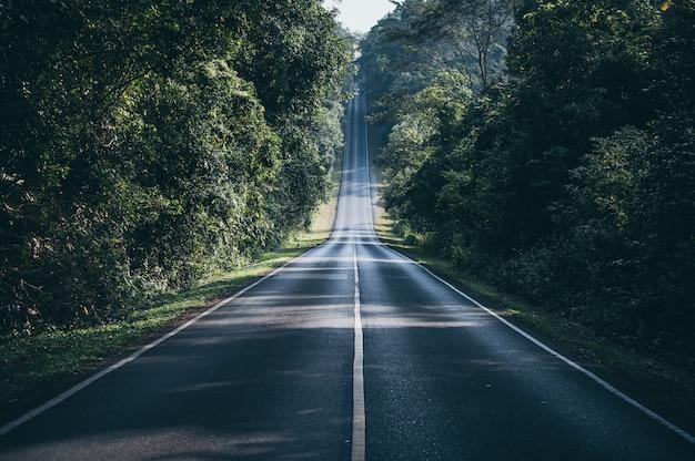 Caminho através do conceito de caminho natural da floresta outonal Foto Premium