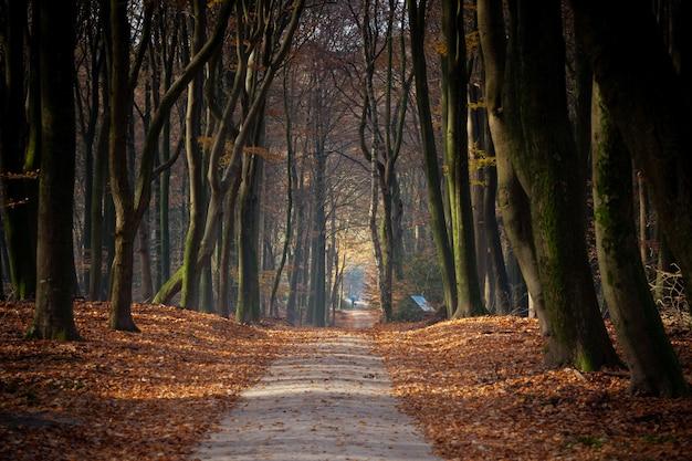 Caminho cercado por árvores e folhas em uma floresta sob a luz do sol no outono Foto gratuita
