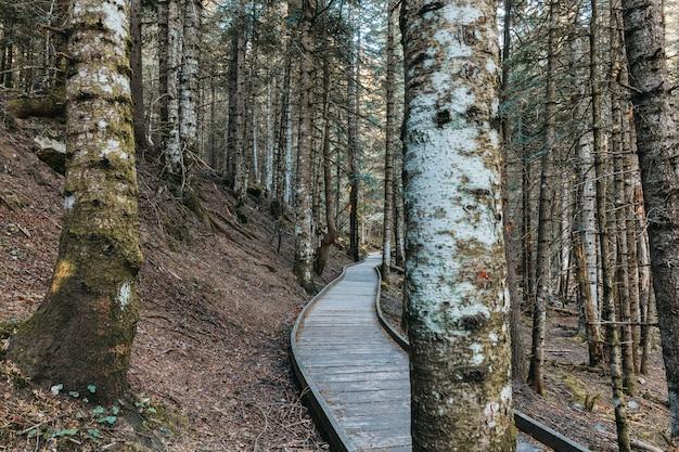 Caminho de madeira dentro de uma floresta Foto Premium