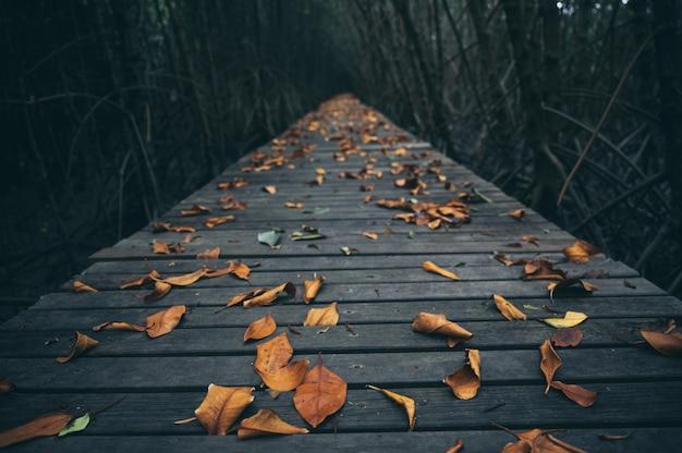 Caminho de madeira na floresta de mangue, sinta a natureza, refresque-se e relaxe Foto Premium