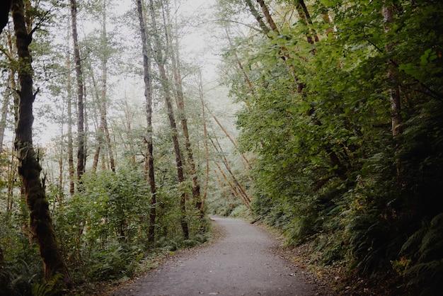 Caminho em uma floresta cercada por árvores e arbustos sob a luz do sol Foto gratuita