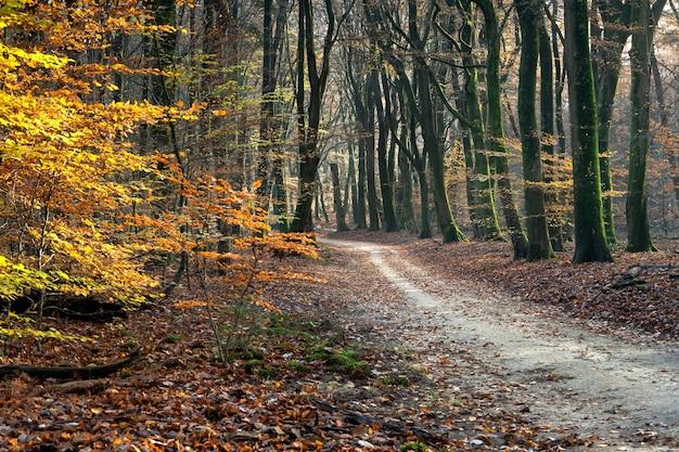 Caminho em uma floresta cercada por árvores e folhas sob a luz do sol no outono Foto gratuita