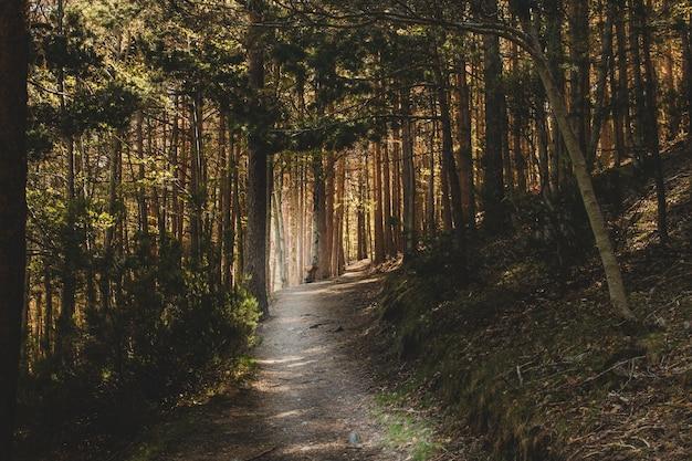 Caminho escuro na floresta Foto Premium