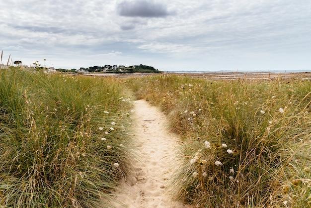Caminho estreito de areia no campo com flores silvestres Foto gratuita