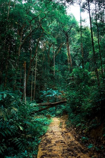 Caminho floresta, em, madeira verde, fundo Foto Premium
