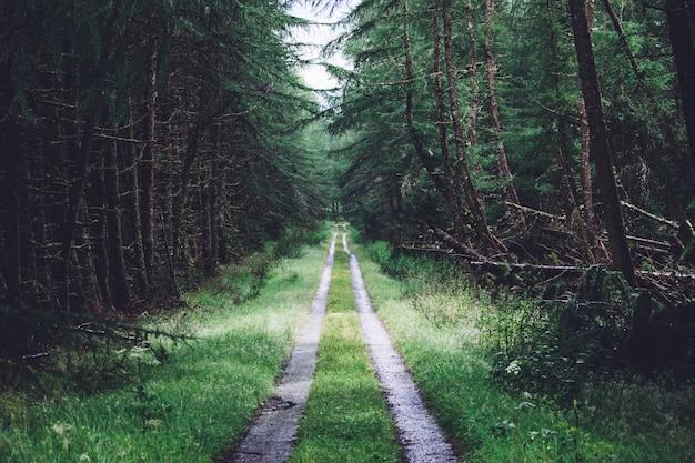 Caminho no meio de uma floresta cheia de diferentes tipos de plantas verdes Foto gratuita