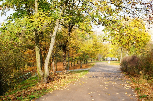 Caminho sob árvores de outono em um parque Foto gratuita