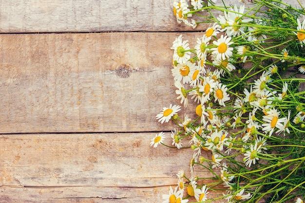 Camomila, uma tag. ervas medicinais. foco seletivo. Foto Premium