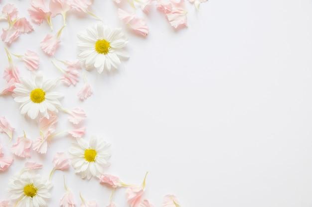 Camomilas e pétalas cor de rosa Foto gratuita