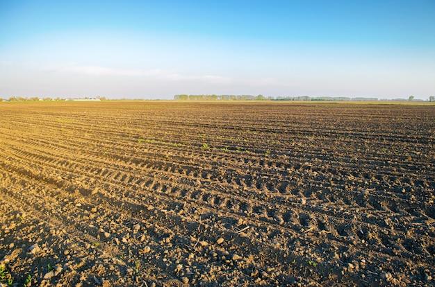 Campo arado após o cultivo para o plantio Foto Premium