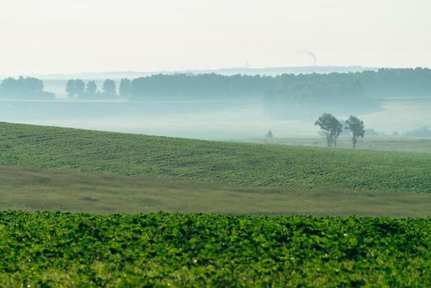 Campo arado enevoado na primavera. Foto Premium