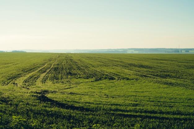 Campo arado na primavera com espaço da cópia. Foto Premium