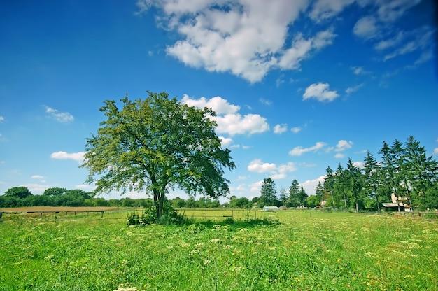 Campo com árvores e grama em um dia ensolarado Foto gratuita