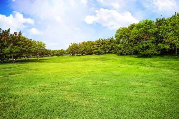 Campo com grama e nuvens Foto gratuita