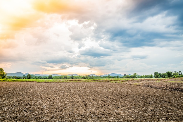 Campo cultivado no por do sol Foto gratuita