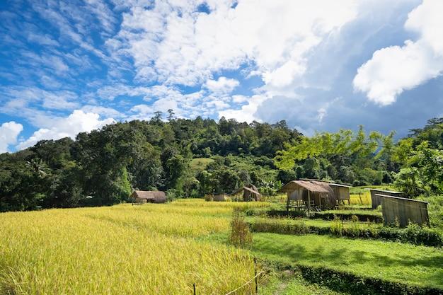 Campo de arroz dourado com pequena casa de campo na bela colina verde e brilhante céu azul nublado Foto Premium