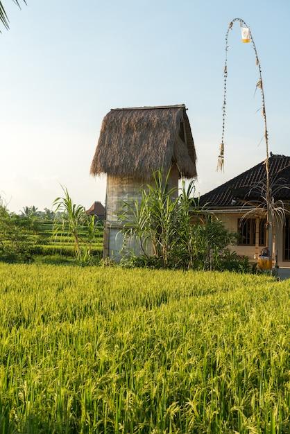 Campo de arroz em bali Foto gratuita