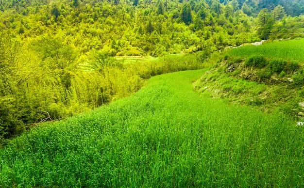 Campo de arroz em terraços Foto Premium