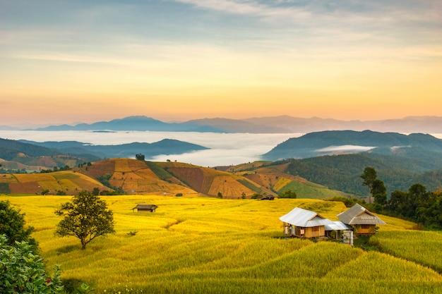 Campo de arroz verde em terraços em pa pong pieng, mae chaem, chiang mai, tailândia Foto Premium