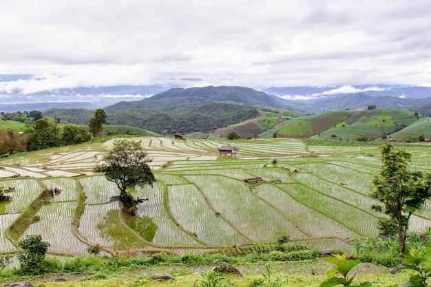 Campo de arroz verde em terraços em pa pong pieng Foto Premium