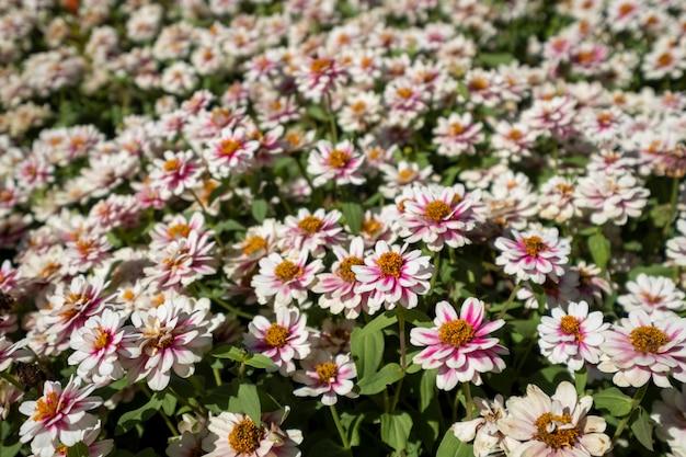 Campo de flores Foto gratuita