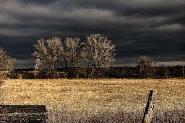 Campo de grama marrom sob o céu preto durante a noite Foto gratuita