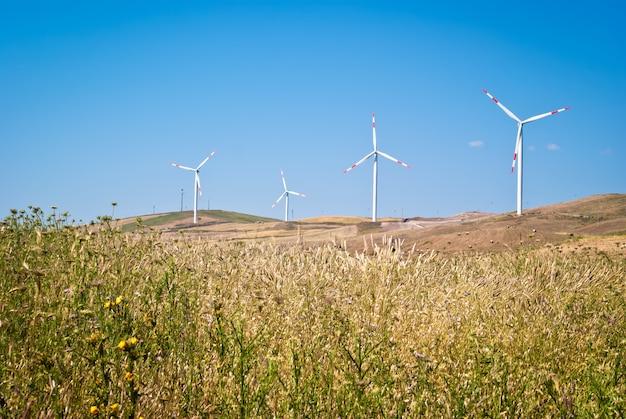 Campo de trigo com moinhos de vento Foto Premium
