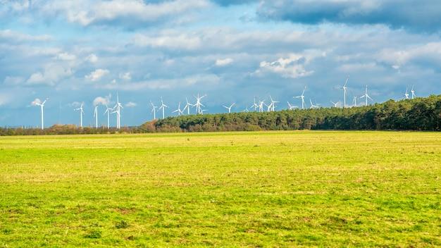 Campo de turbinas eólicas Foto Premium