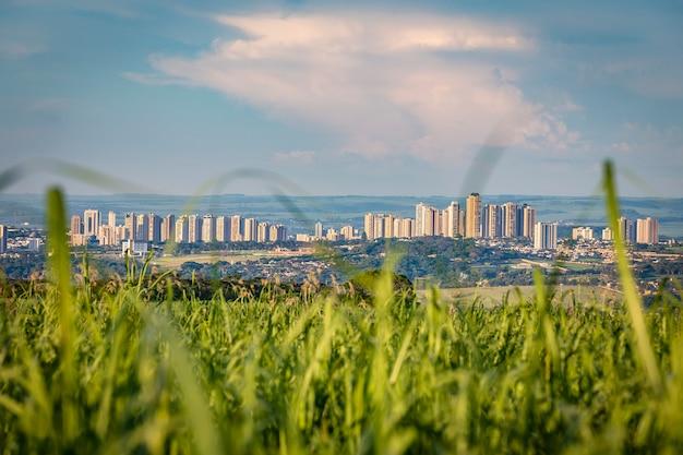 Campo do cana-de-açúcar com a cidade de ribeirao preto no backgrund no por do sol. Foto Premium