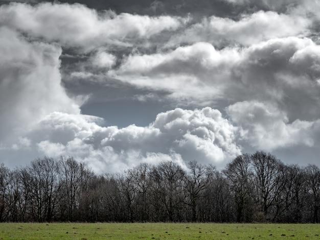 Campo gramado com árvores sem folhas à distância e um céu nublado ao fundo Foto gratuita
