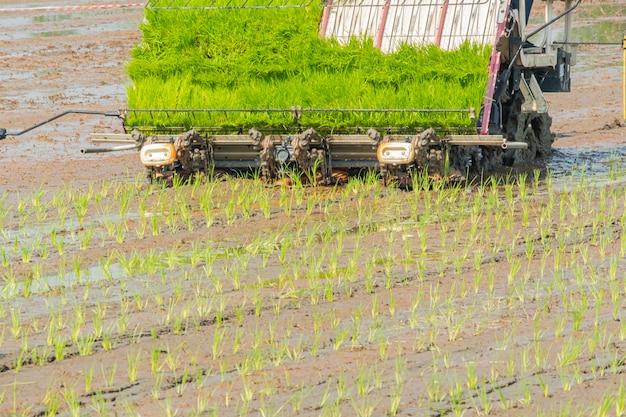 Campo novo do arroz da plantação com tranplanter do arroz. plantação de motores Foto Premium